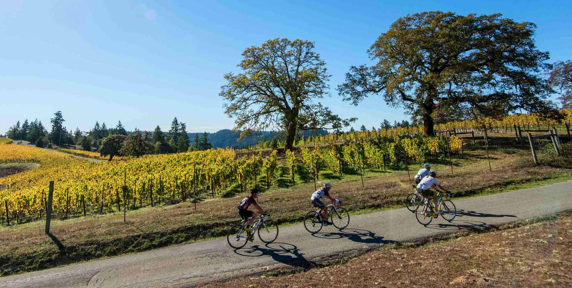 Sonoma County Bike Trails by Skill Level | SonomaCounty com