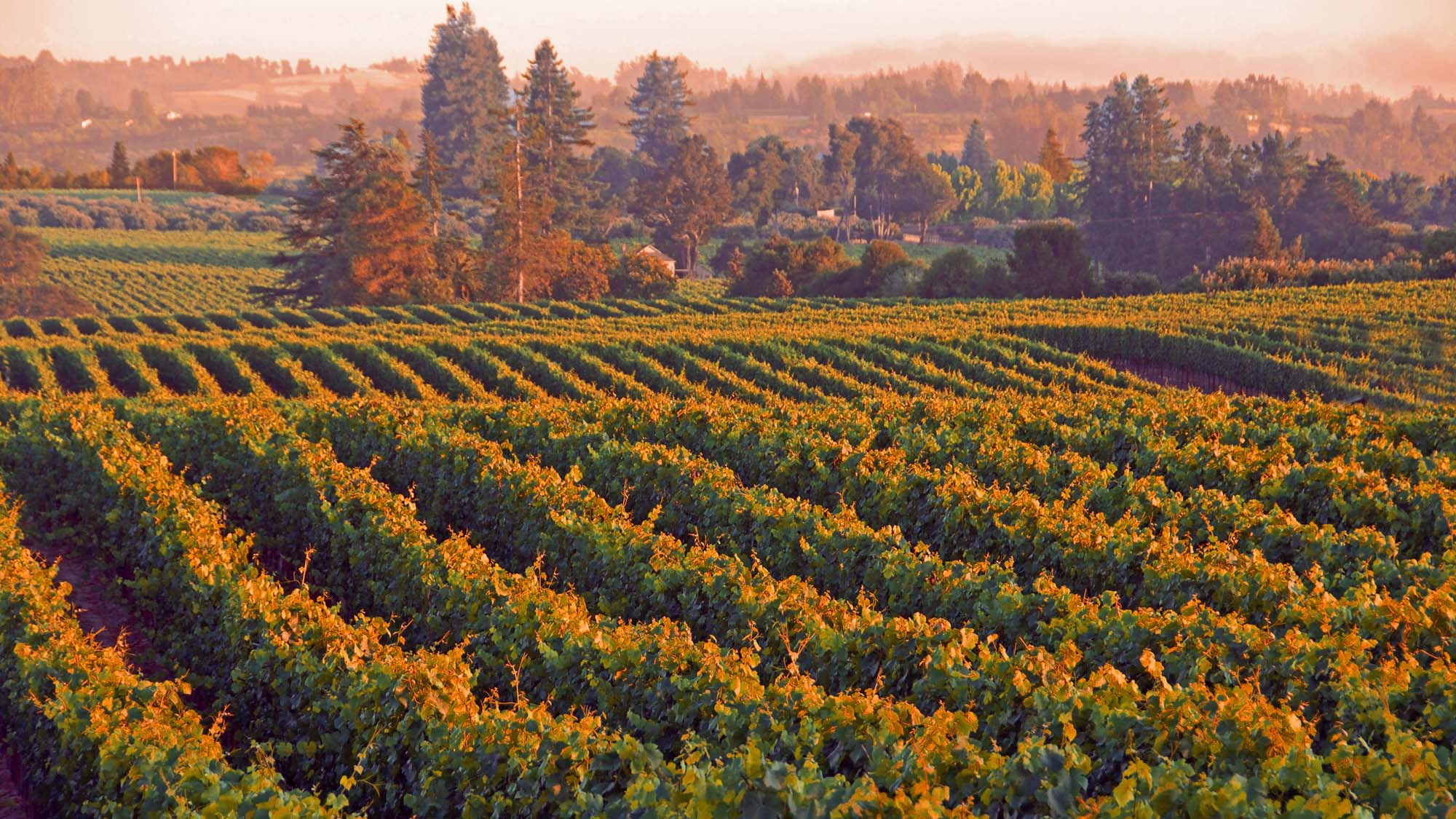 5 Day Trips From San Francisco to Sonoma Wine Country  SonomaCounty.com