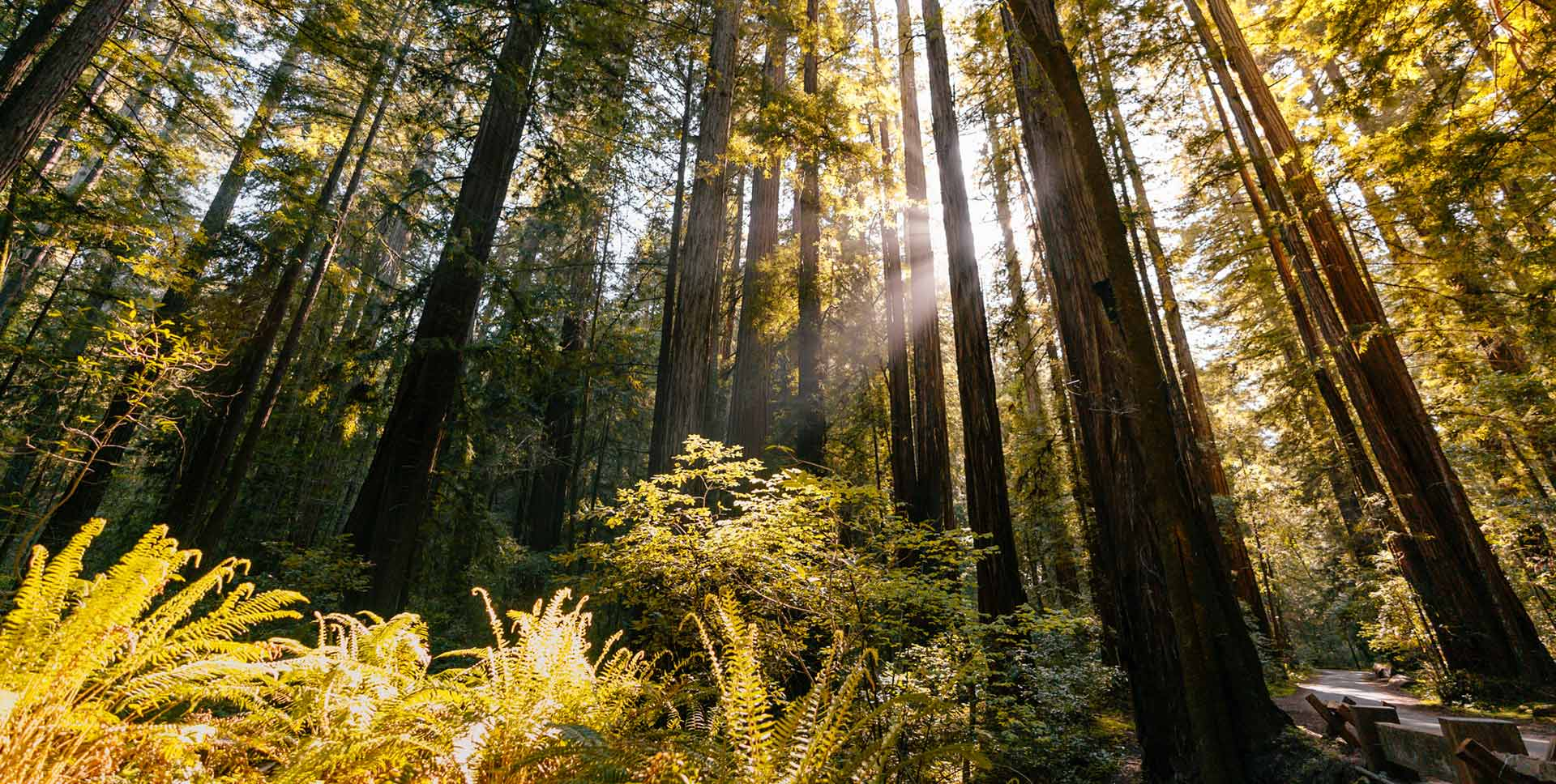 Best Campgrounds in Redwood