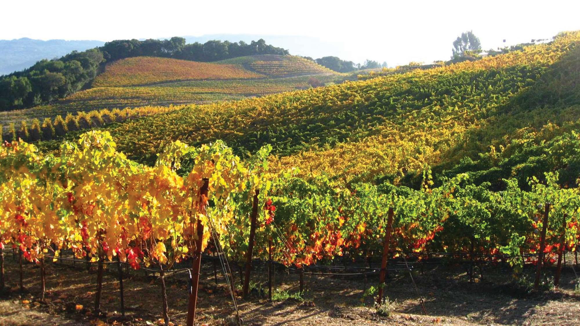 Fall In Sonoma County Sonomacounty Com