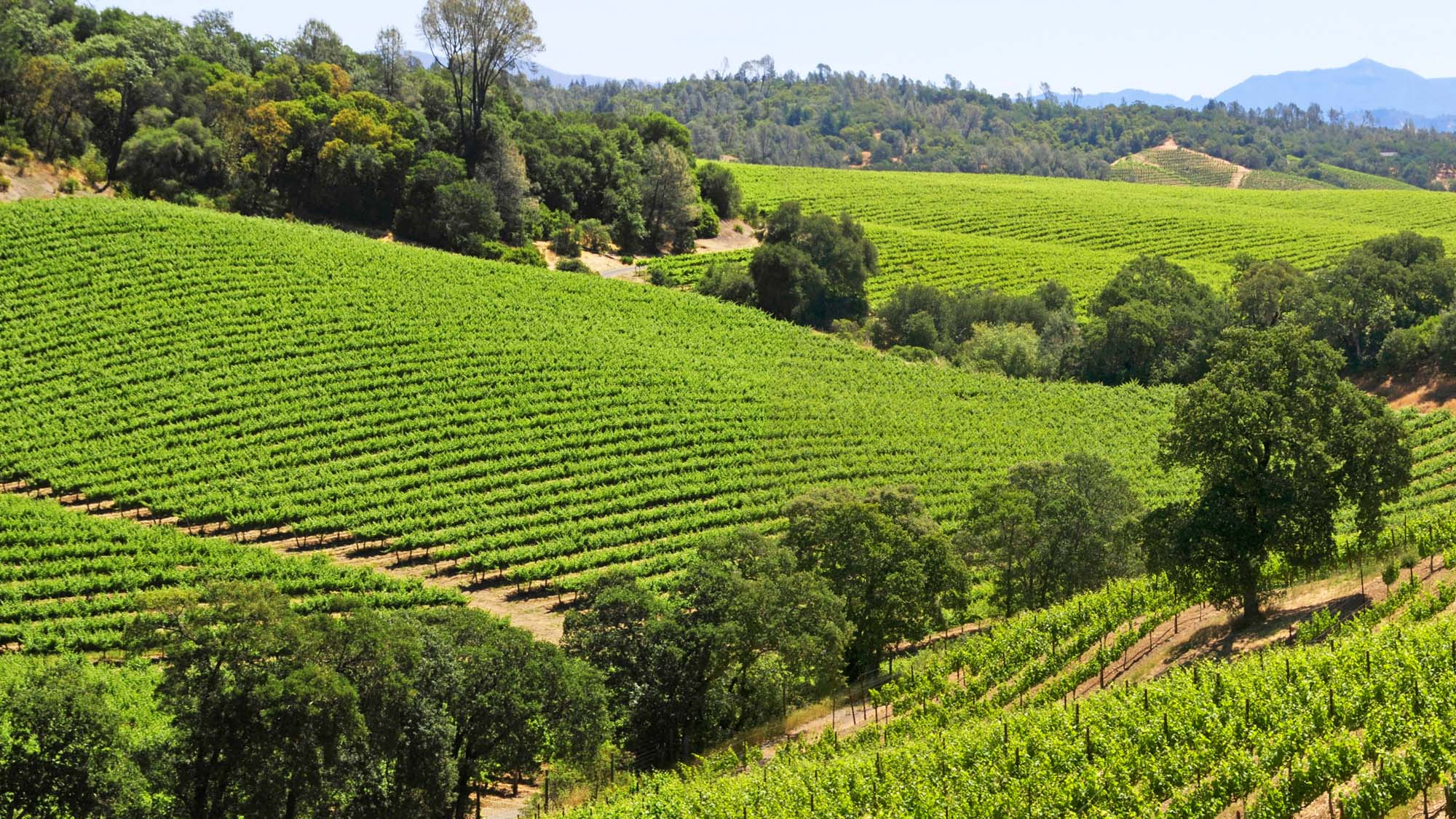 Dry Creek Valley Wine Region and Appellation