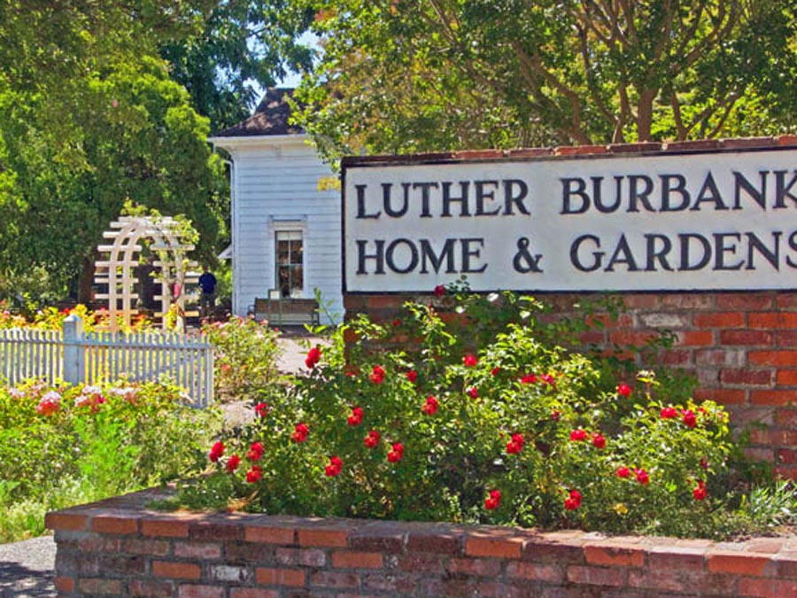 Luther Burbank Home & Gardens has many flowers growing out front