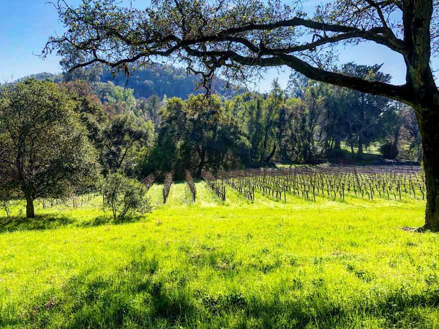 Image of the vineyards at Bartholomew Estate Winery in the Sonoma Valley.