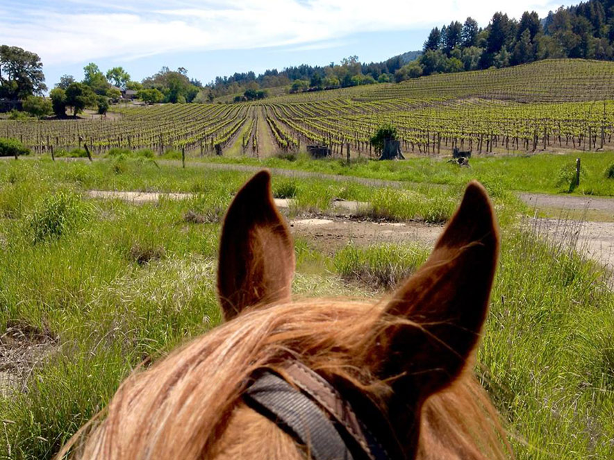 We sit from a rider's perspective on a horse overlooking Jack London State Park