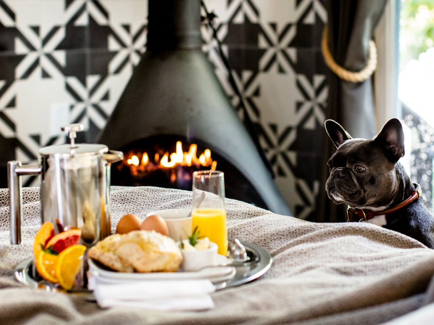 A pug looks at a breakfast in bed spread in front of a cozy fireplace at Boon Hotel and Spa in Sonoma County, California