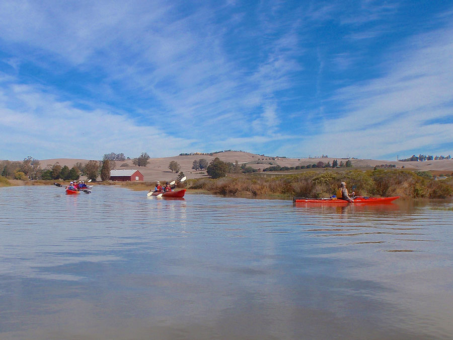 A group kayaks along the Petaluma River in Sonoma County with Clavey Paddlesports