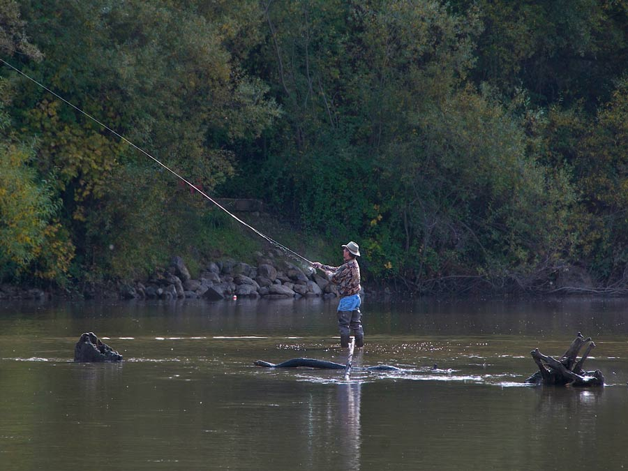 A man enjoys fishing in waders in the Russian River at Rio Nido, Sonoma County