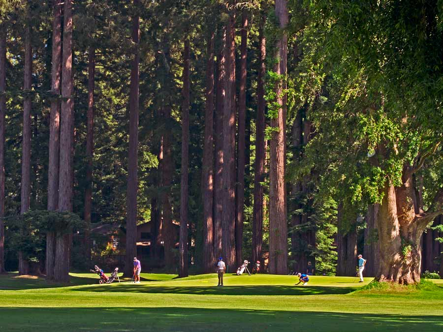 People enjoy a round of golf next to redwoods at Northwood Golf Club, Monte Rio