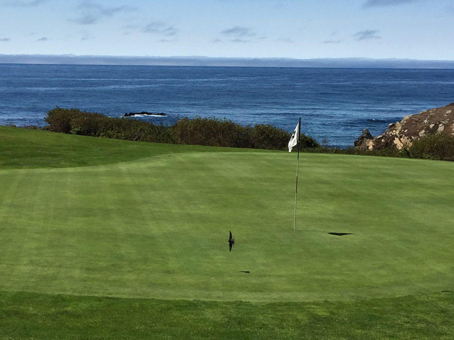 Play golf right on the coast at The Sea Ranch Golf Links, The Sea Ranch