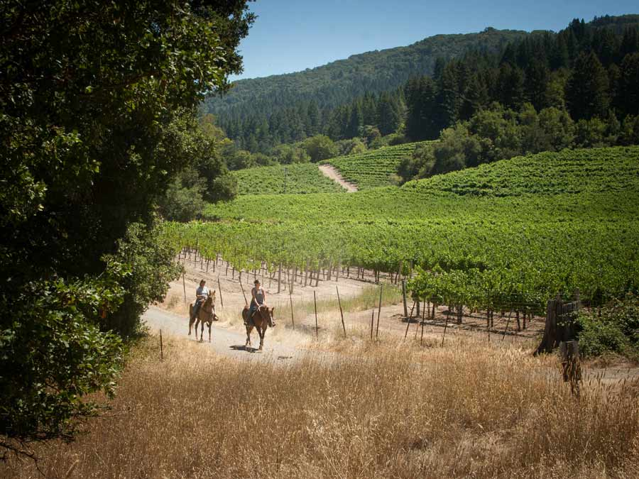 Two people ride horses next to vineyards in the summer at Jack London State Historic Park in Glen Ellen