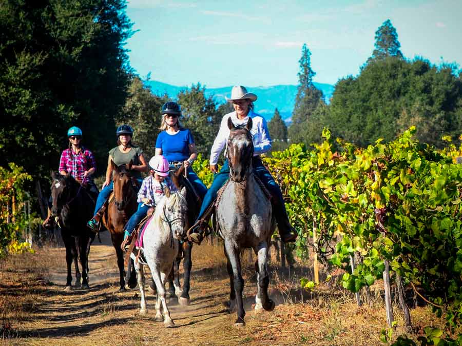 A group rides next to vineyards in Sebastopol with Rollin F Ranch, Sonoma County