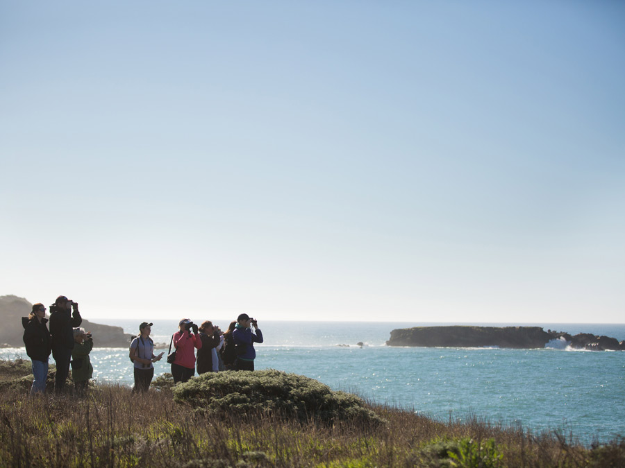 People use binoculars to look for whales along the Sonoma Coast