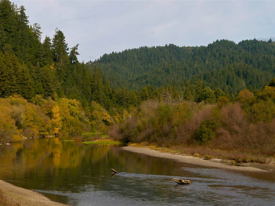 The Russian River in Rio Nido is surrounded by trees in Sonoma County