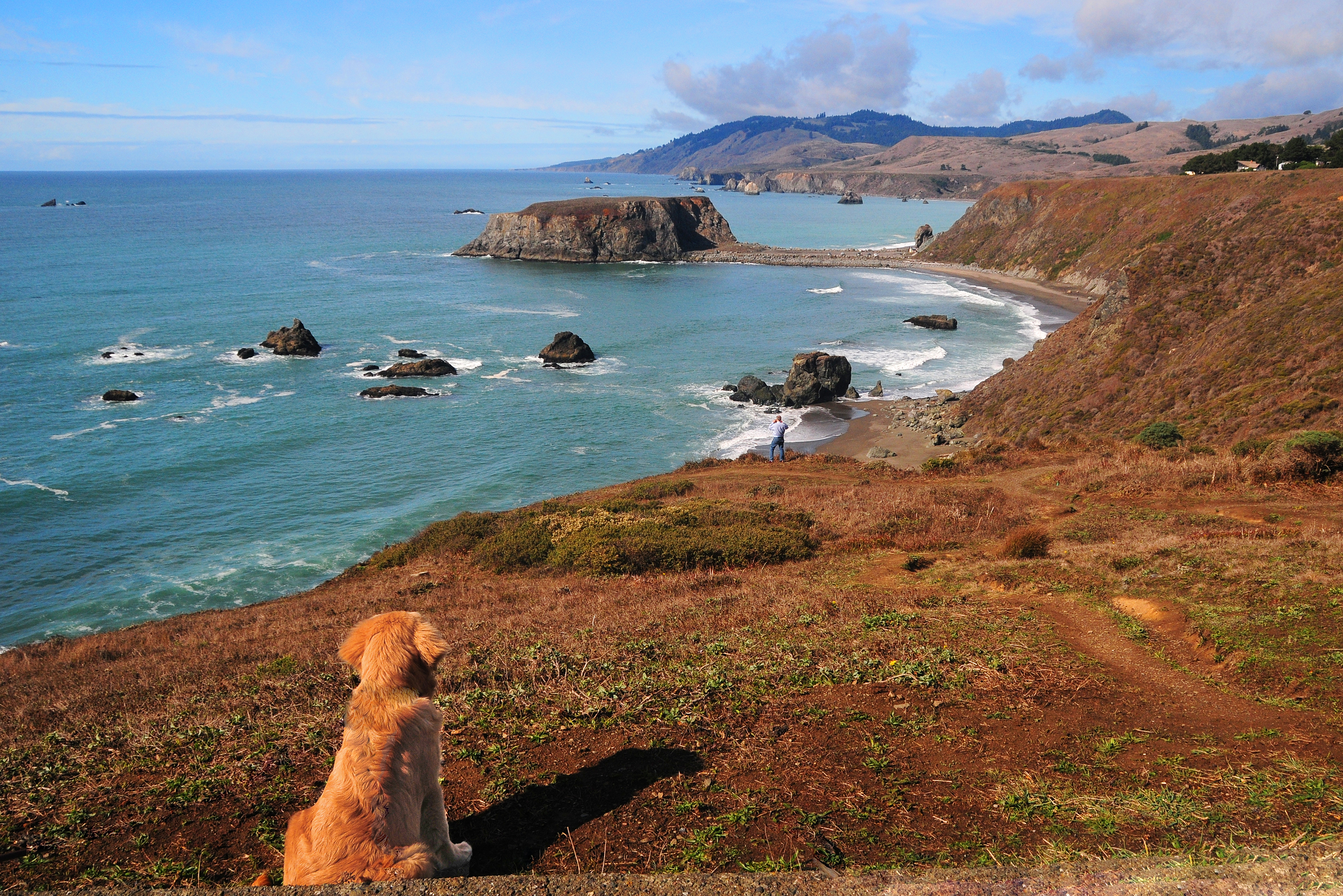 A dog sits on a bluff looking down at Goat Rock Beach