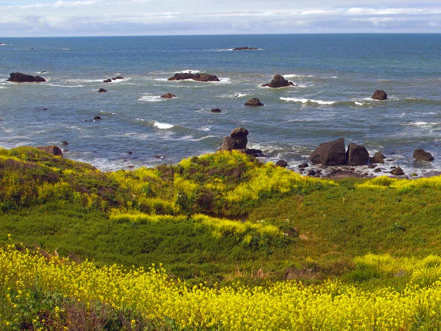 Wildflowers bloom along the coast on the Kortum Trail, Sonoma County