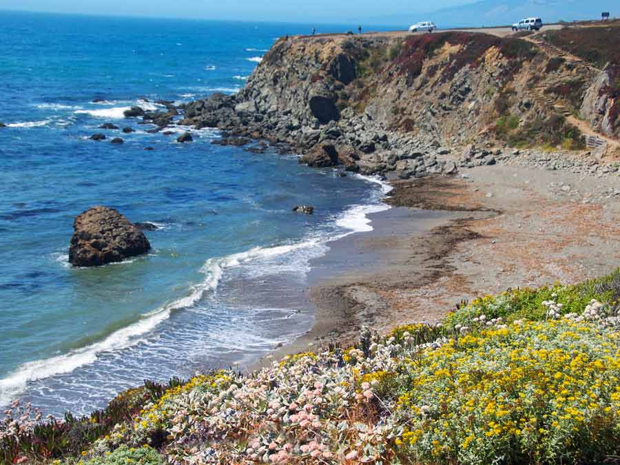 Pink, yellow, and white wildflowers bloom along the coast in Sonoma County