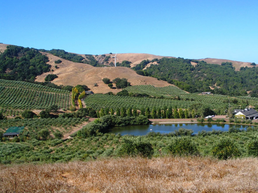 McEvoy Ranch in Sonoma County