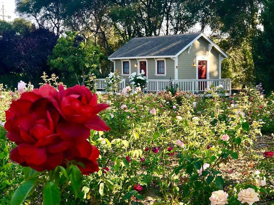 A red rose is in the foreground, a small shed in the background at Garden Valley Ranch