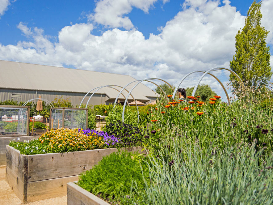 Garden beds are full of flowers and produce in the summer at Cornerstone Sonoma in Sonoma County