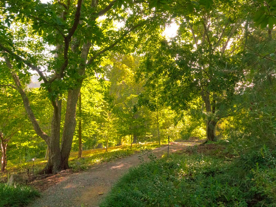 A path leads into a verdant wood streaming with sunlight