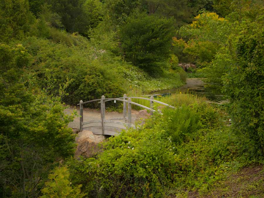 A bridge crosses the creek surrounded by plants and flowers at Quarryhill Botanical Garden, Sonoma County
