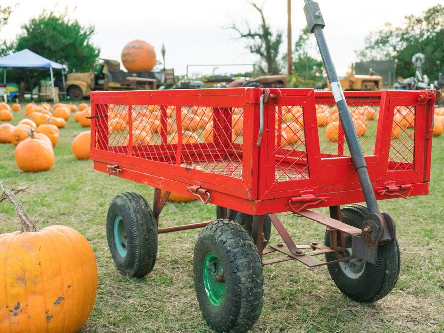 A red wagon is ready to load up pumpkins at Grandmas pumpkin patch in sonoma county