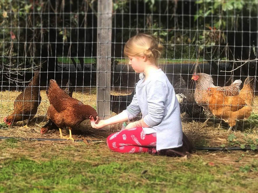 Chickens and little girl at Horse & Plow Cidery