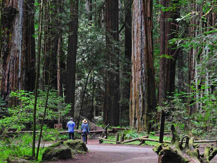A couple walks along a trail below the trees at Armstrong Redwoods State Natural Reserve, Guerneville