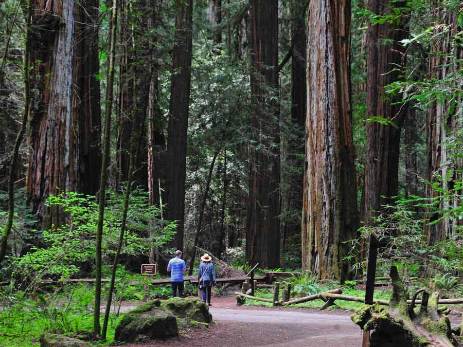 People hike through Armstrong Redwoods State Natural Reserve