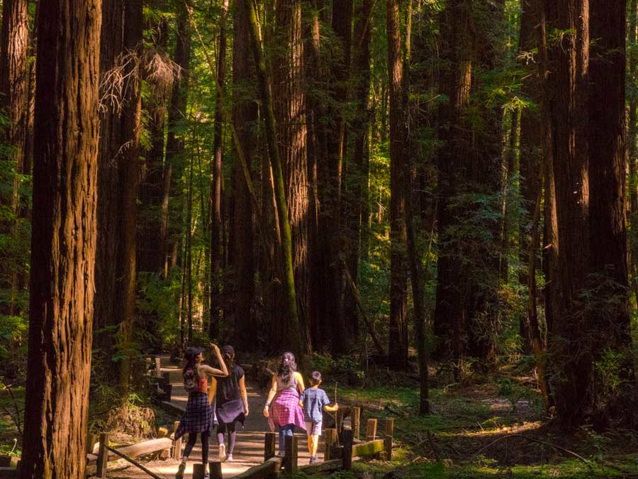 A family with kids hikes amongst the redwoods at Armstrong Redwoods State Natural Reserve, Guerneville