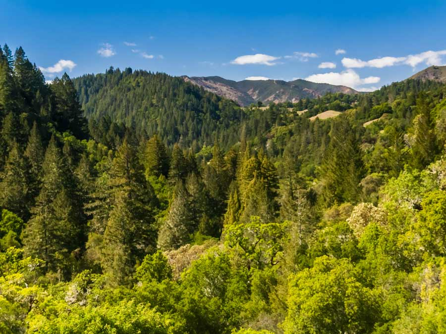 The trees line the mountain ridge at Austin Creek State Recreation Area, Guerneville