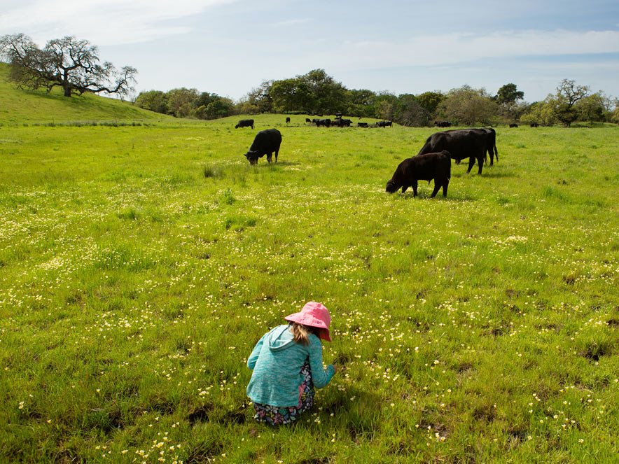A person picks wildflowers with cows in the distance