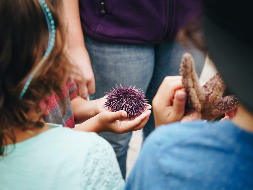 Children hold a sea urchin in Sonoma County, California