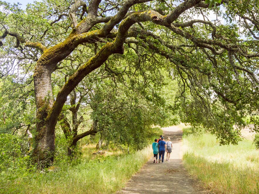 People walk down an oak-lined trail at Jack London State Historic Park, Sonoma County