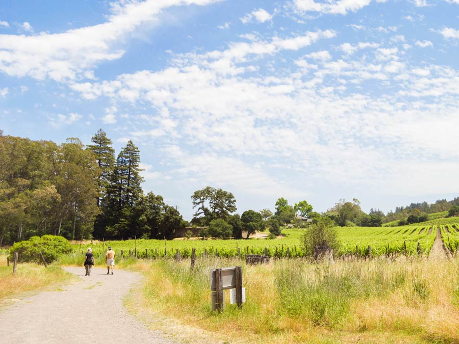People hiking next to vineyards at Jack London State Historic Park in Glen Ellen