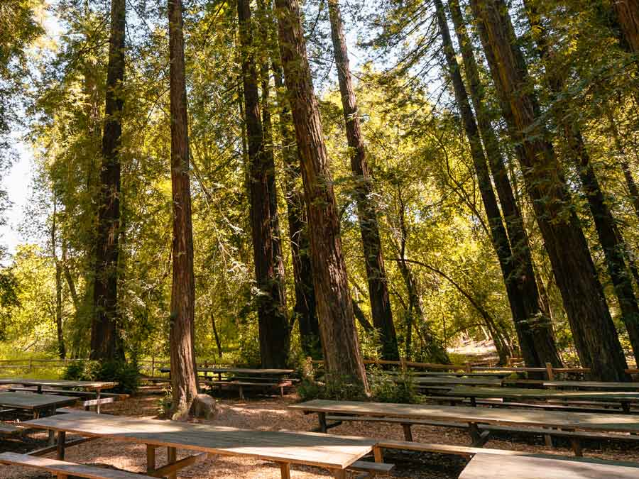 A picnic grove under the shade of redwoods at Riverfront Regional Park, Healdsburg. Calfornia Redwoods
