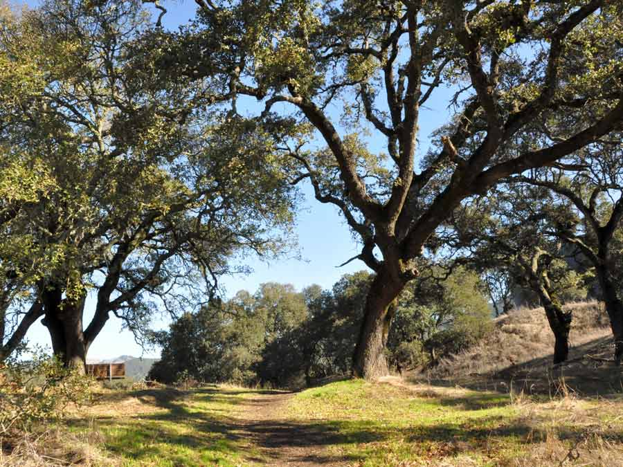 A path winds below oak trees at Sonoma Valley Regional Park, Glen Ellen