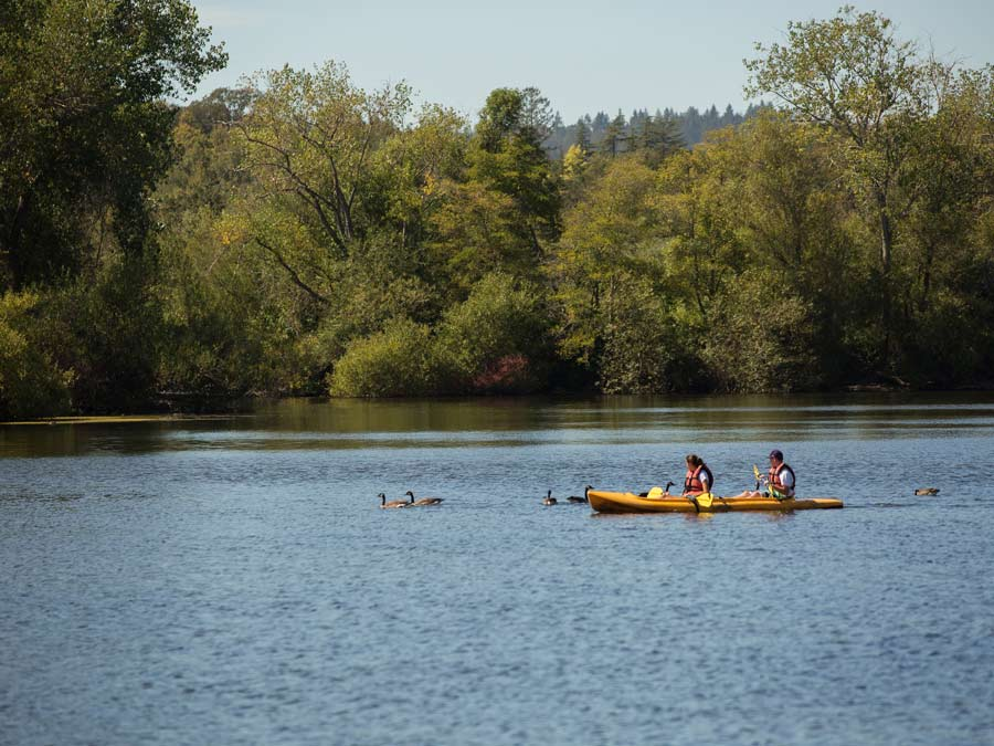 Two people kayak next to ducks at Spring Lake Regional Park, Santa Rosa
