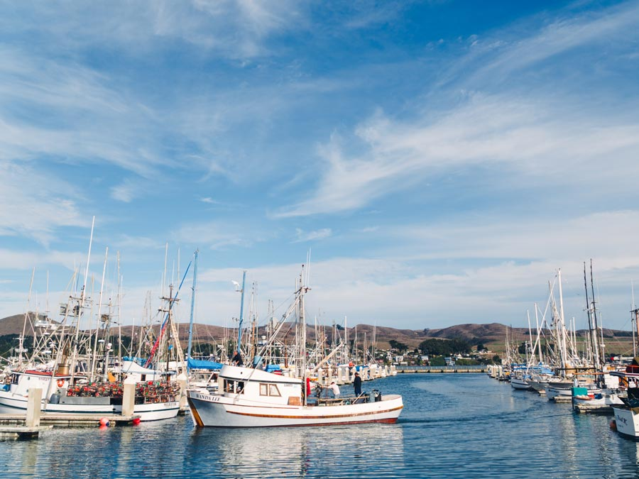 Boats are parked in the Spud Point Marina, Bodega Bay, on a sunny day