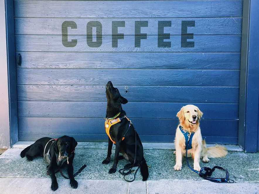 three dogs in front of Acre Coffee in Sebastopol in Sonoma County