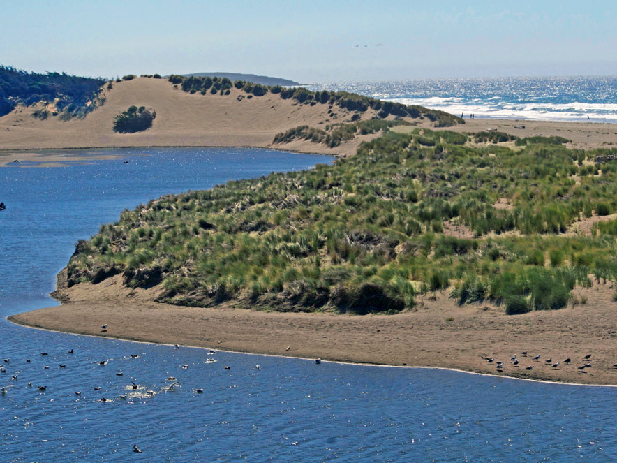 Salmon Creek Beach in Sonoma County