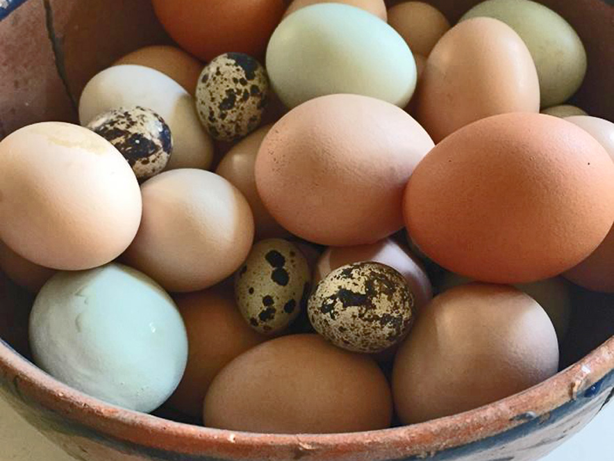 basket of eggs collected at Shanti Permaculture Farm in Sonoma County
