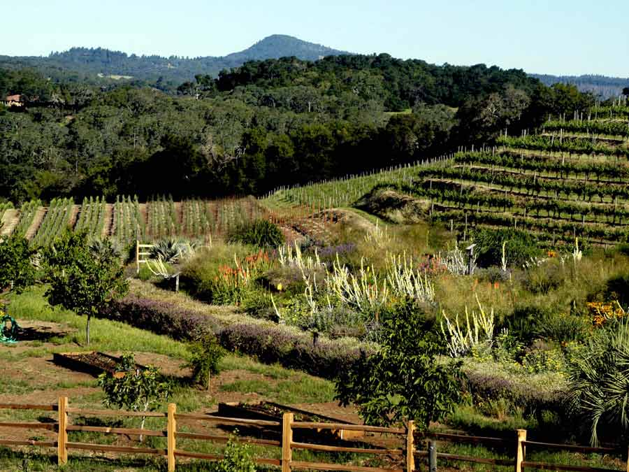 The insectary at Benziger Family Winery is home to numerous plants and bugs that are critical to the health of the vines