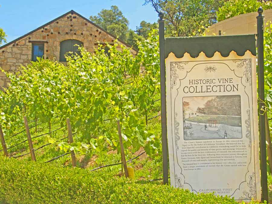A sign outside of Buena Vista Winery in Sonoma explains the historic vineyards on the property