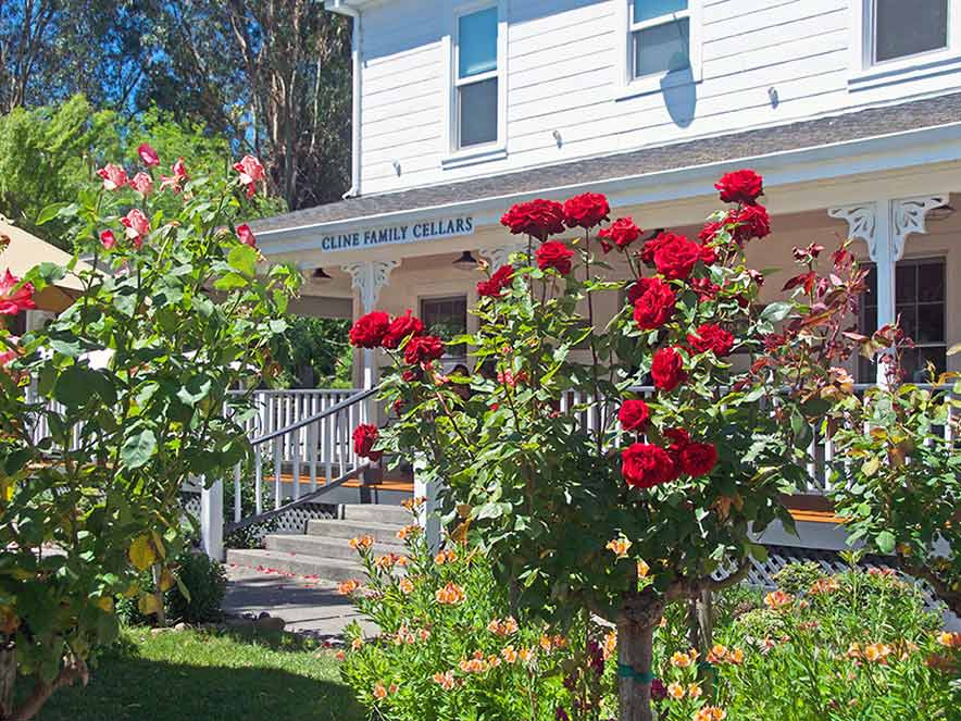 The tasting room at Cline Family Cellars in Sonoma is surrounded by blooming roses in the summer