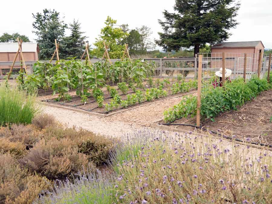 The organic gardens at DeLoach Vineyards, Santa Rosa