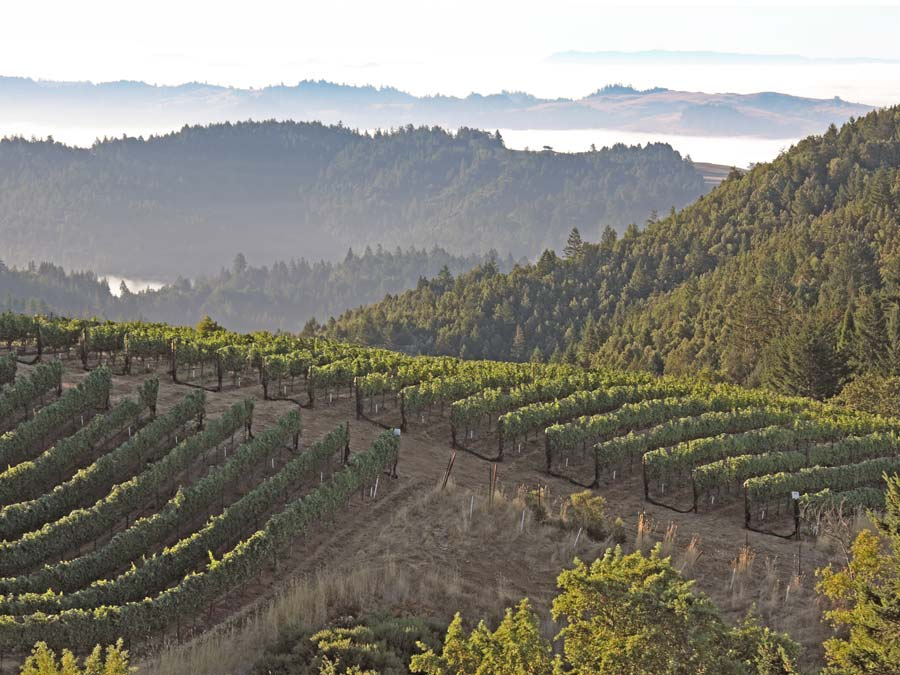 The spectacular view of vineyards and mountains from Fort Ross Vineyard, Winery & Tasting Room, Jenner