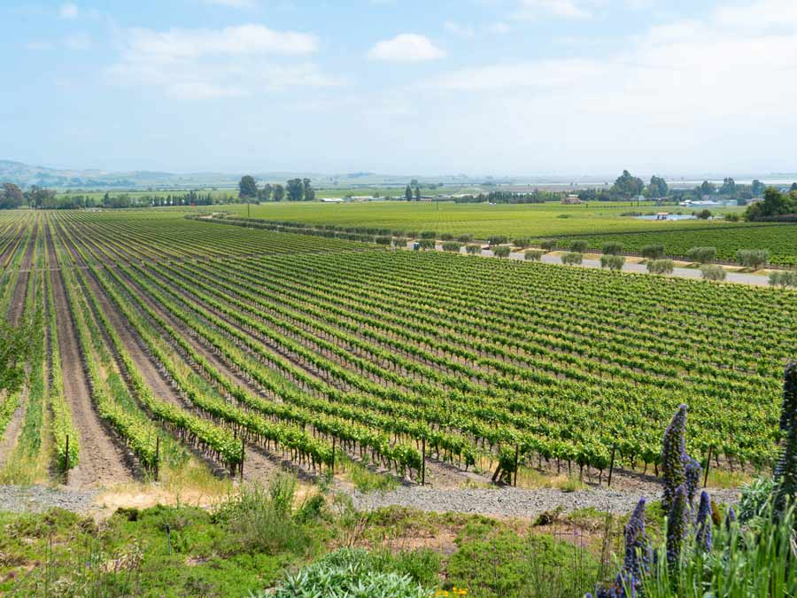 Rows of green vines grow in the valley next to the tasting room in Sonoma County