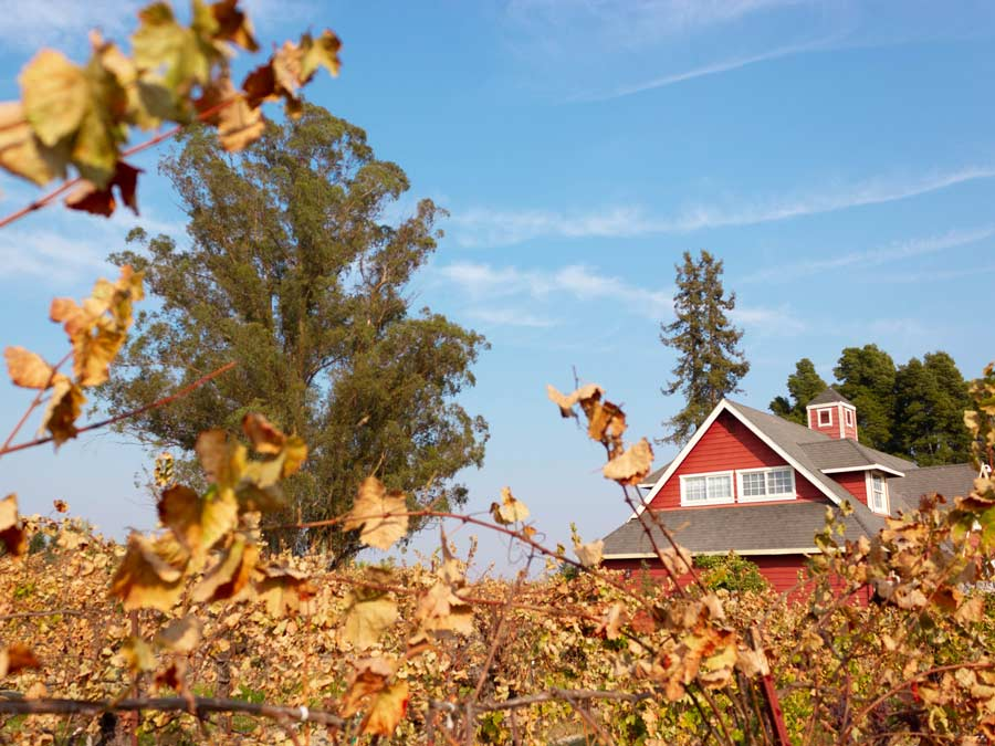 The tasting barn surrounded by fall vineyards at Harvest Moon Estate & Winery, Santa Rosa