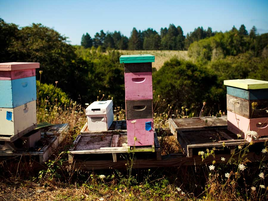 Bee hives sit next to the vineyard at Littorai Wines, Sonoma County